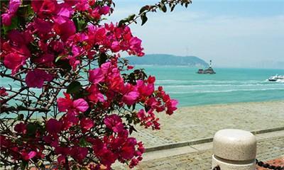 【跟团】厦门海上观金门游船+南普陀+环岛路精华一日游
