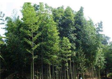 竹种园旅游简介