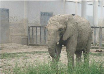 野生动物园旅游简介