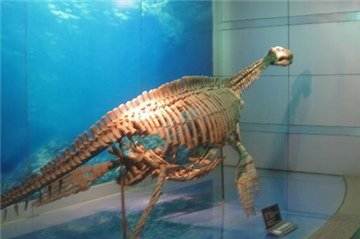 恐龙博物馆旅游简介