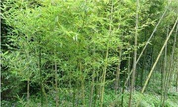 大竹林森林公园