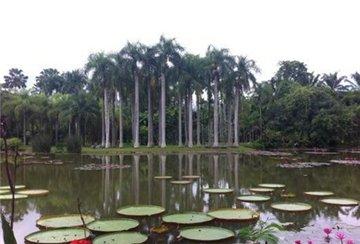 中国科学院西双版纳植物园