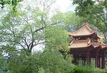 中山公园旅游简介