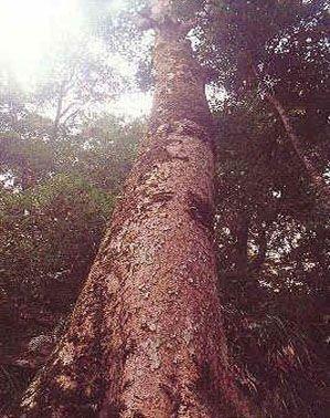 萝卜岩楠木自然保护区