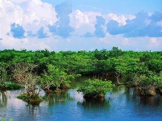 海南海口东寨港红树林1日游