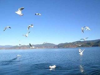 西宁出发—青海湖1日游