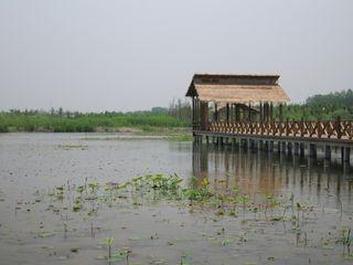 泰州溱湖湿地自驾2日游