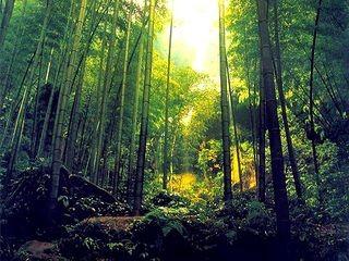 安吉大竹海-藏龙百瀑风景区自驾2日游