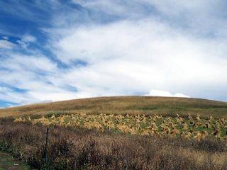 夏河拉卜楞寺-桑科草原2日游