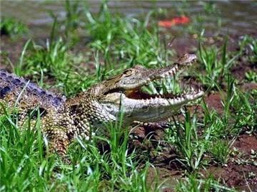 海南南泰鳄鱼湖动物园