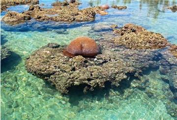 三亚珊瑚礁自然保护区旅游简介