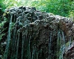 南林森林自然保护区