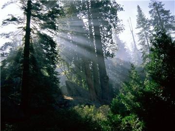 白水岭热带森林保护区