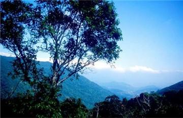 吊罗山森林公园