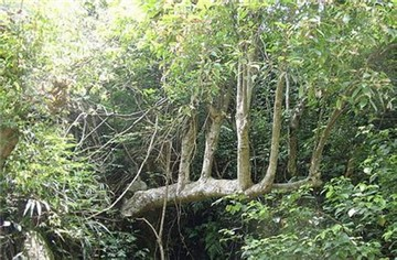 会山森林自然保护区