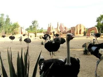 新澳東方鴕鳥觀賞園
