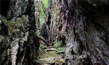 毛感仙安石林