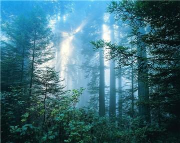 钟灵山国家森林公园