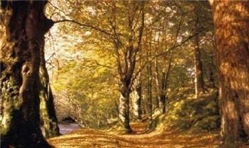 小白龙森林公园