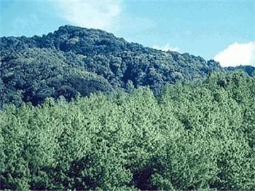 小黑山自然保护区旅游简介