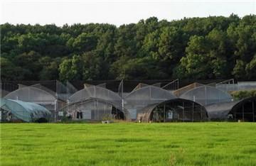 農業產業化花卉基地