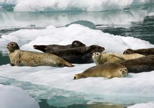 斑海豹国家自然保护区旅游简介