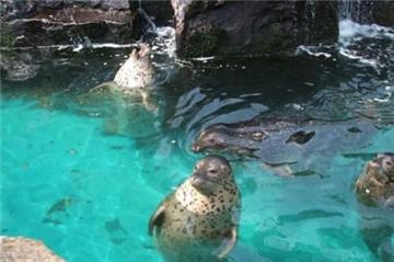 极地海洋动物馆