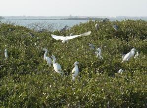 白鹭自然保护区