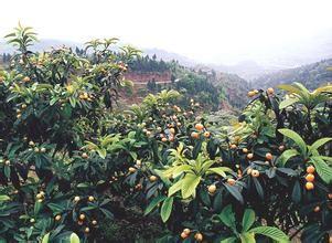 吉林左家特产观光农业生态园