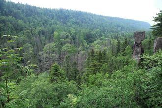 岳桦林景观带