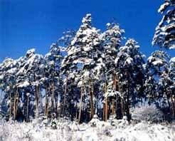 长白山冬训中心