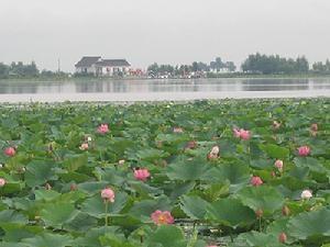 莲花湖公园