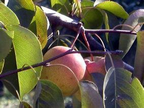 梨树沟果品实验开发基地