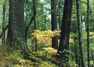 太平沟原始森林旅游区